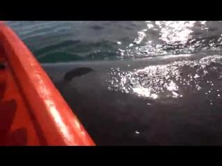 Покатались на ките.