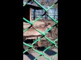 05.2017_Зинаида и Зоопарк 030