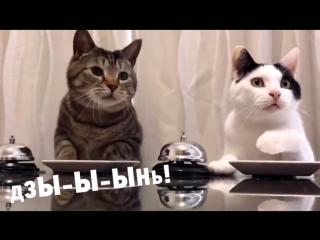 Дзы-Ы-ынь и котики