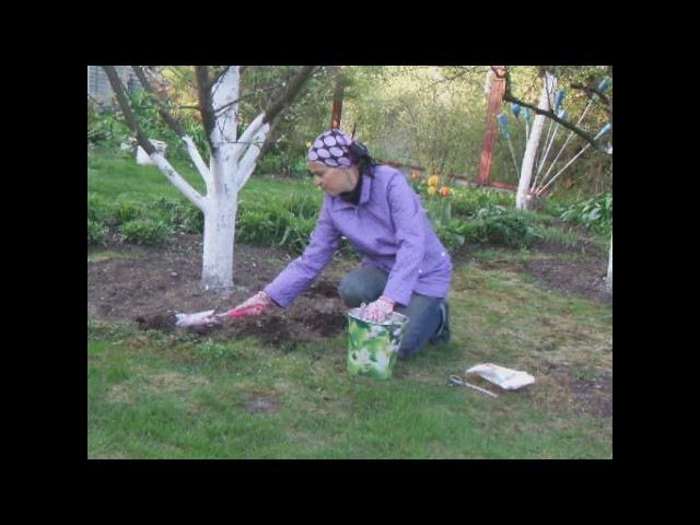 Подкармливаем плодовые деревья по методу шведского стола