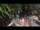 рыбки океанариум