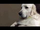 Собака не хочет отказываться от своей соски