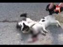 Дагестанский кот покорил интернет своей преданностью