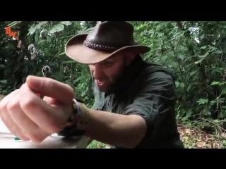 Укус муравья-пули