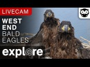 West End Bald Eagle Cam powered by