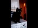 ОПА ГАНГАМ СТАЙЛ Кошка