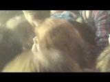 Дайте Танк (!) - Вуайерист(2) (190320117 клуб ТЕАТРЪ)