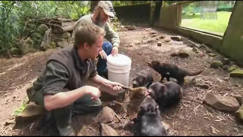 Дикая жизнь с Тимом Фолкнером The Wild Life of Tim Faulkner 2013 23 смотреть онлайн без регистрации