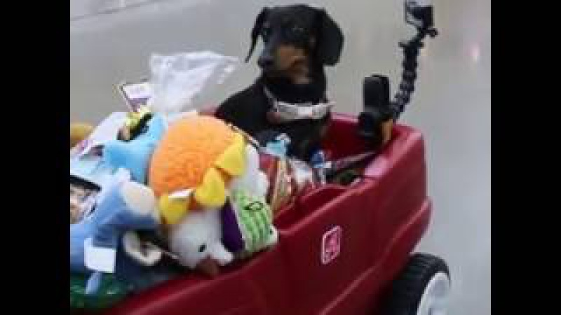Crusoe Makes a Visit to Humane Society for His Birthday
