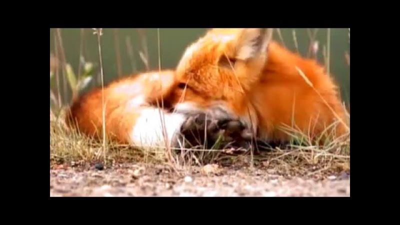 Мультфильм В мире дикой природы. Смотреть Сезон 1. Серия 47