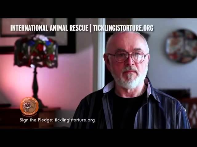 Tickling slow loris animal torture