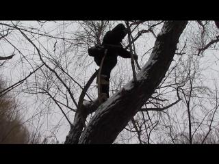 Кролик Блэк залез на дерево