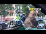 ...))))..В Архангельске байкеры прокатили медведя Тиму на мотоцикле