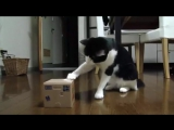 Милыи котик играет с копилкой