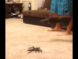 Паук атакует