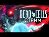 СТРИМ► DEAD CELLS👑[Метроидоидивания + Роуглайксоулз]  обзор прохождение русский язык