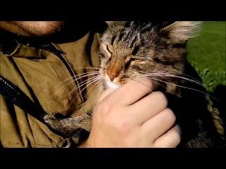 Коп монет Местный смотрящий кот Базилио Краш квадрокоптера