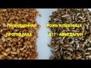 Как правильно прорастить рожь и пшеницу Полезные советы Читайте под видео