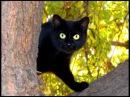 История про Кошку и её Человека. Автор слов Саша Бест