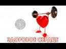 Доктор Спорт Здоровое Сердце ljrnjh cgjhn pljhjdjt cthlwt