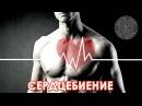 Доктор Спорт Сердцебиение и Аритмии ljrnjh cgjhn cthlwt btybt b fhbnvbb