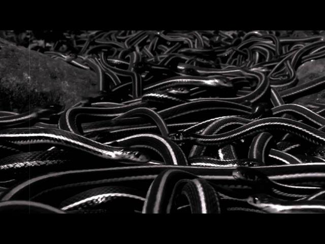 VENOM PRISON - DEVOID (official video)
