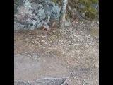 landa_b12 video