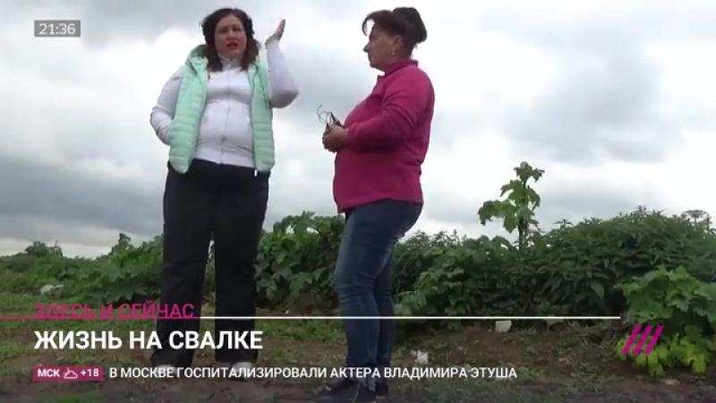 ДОЖДЬ: Не трепыхайтесь, все проплачено до Московской области»: куда везут мусор из закрытой Путином свалки в Балашихе