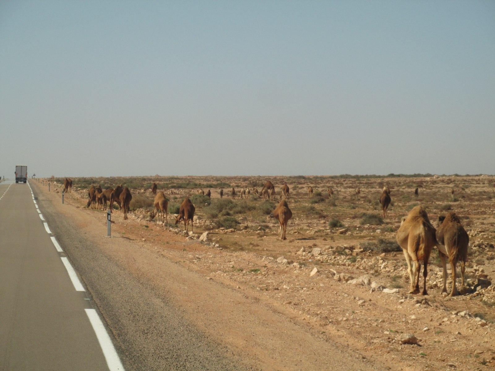 (Западная) Сахара