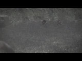 Армагеддон животных - Палеогеновое вымирание, огонь и лёд. 7 фильм