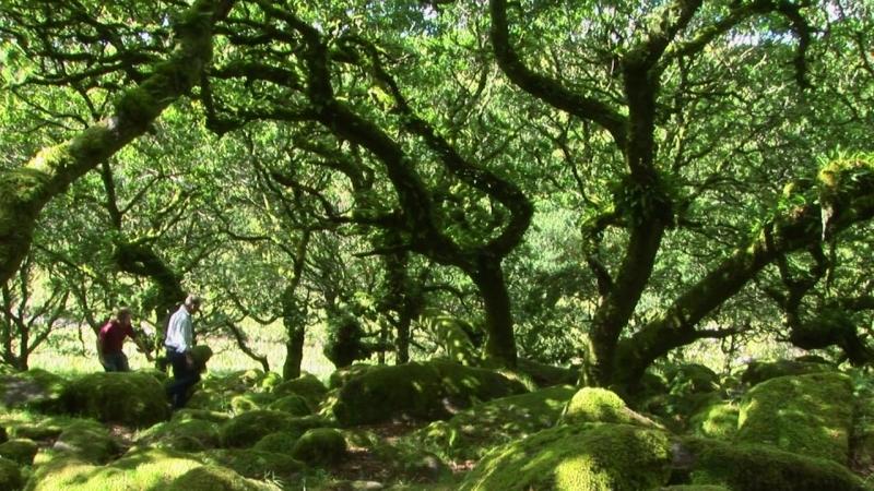 BBC Жизнь / BBC Life 9 cерия Plants / Растения.