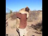 Животные любят обнимашки