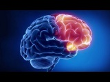 Коннектом. Как мозг делает нас тем, что мы есть (рассказывает Константин Анохин и...