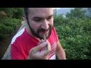 Самое Большое Чайное Дерево в Мире! Путешествие в Фэнцин, Часть Вторая
