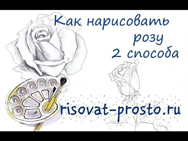 Как нарисовать розу. 2 способа. Уроки рисования цветов для начинающих.