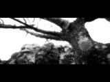 SHE HUNTS KOALAS - OWLS ON THE ROAD (Official Video HD)