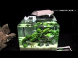 The Art of the Planted Aquarium 2015 - Dennerle Scapers Tank (Nano) compilation