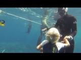 Fedya freediver