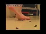 Crush fetish barefoot bugs