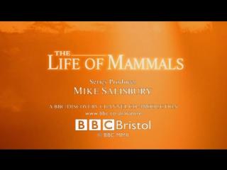 BBC Жизнь млекопитающих 03_Plant Predators
