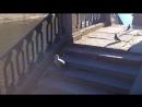 Птица Гамаюн на канале Грибоедова. 28.06.2017