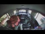 Девушка сняла наручники и угнала полицейский джип в стиле GTA.