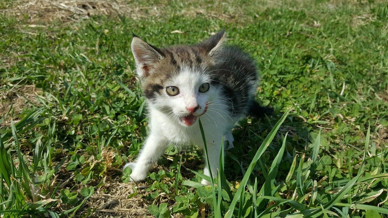 котенок в добрые руки, отдам котенка