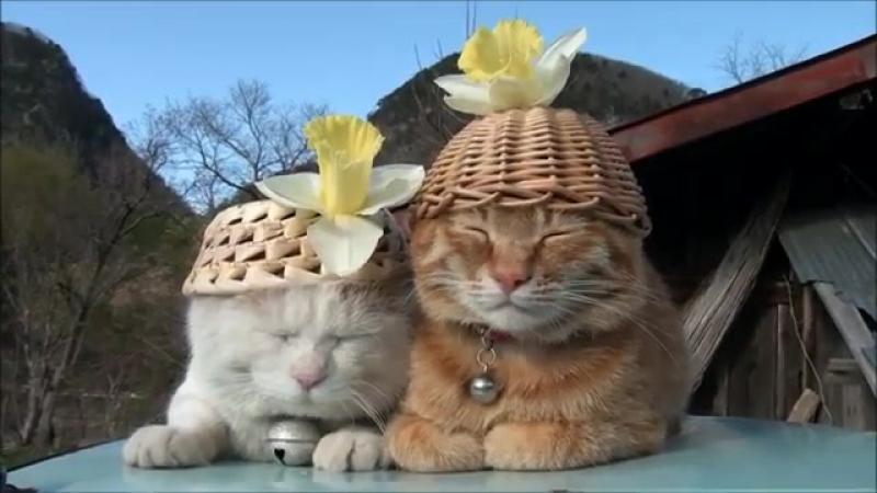 Коты - мастера Дзэн ...