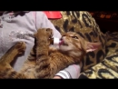 Кот и валерьянка ..