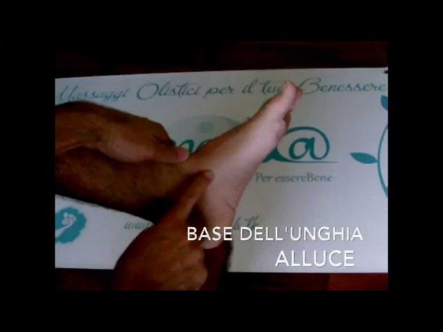 Benessere a Padova: Gli Organi in Riflessologia Olistica