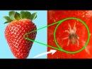 Удивительная структура еды под микроскопом