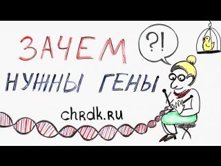 Зачем нужны гены?