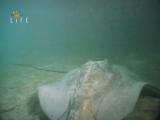 Тайны, что скрывает океан Fifth Dimension 2004. Океан глазами рыб