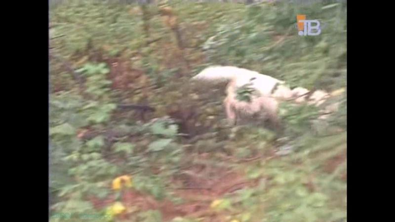 «Охотничьи собаки. Вандейский бассет-гриффон» (Познавательный, кинология, 2002)